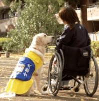 【盲導犬】は有名だけど【介助犬】って知ってる?愛知県長久手市で優秀で人懐っこいラブラドール・レトリバーが日々訓練に励んでいます。応援したりしませんか?